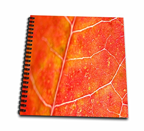 Yves Creations Colorful Leaves - Orange Leaf - Memory Book 12 x 12 inch (db_36747_2)