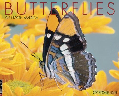 Butterflies Calendar 2013