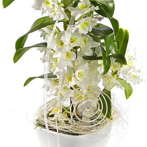 asiatische-traubenorchidee-im-deko-topf