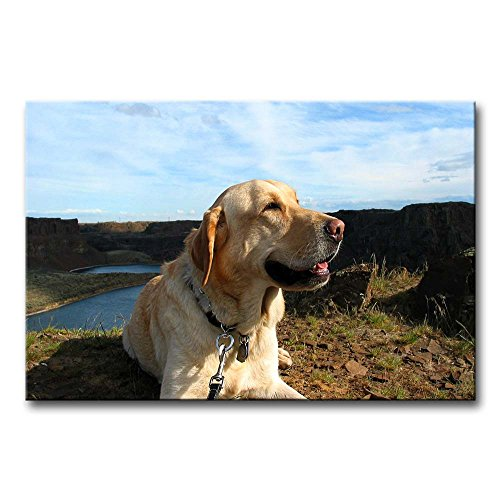 Wall Art Painting Golden Retriever Up Ahead In The Distance Prints On Canvas The Picture Animal Pictures Oil For Home Modern Decoration Print Decor For Kids Room