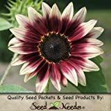 "15 Seeds, Sunflower ""Cherry Rose"" (Helianthus annuus) Seeds By Seed Needs"