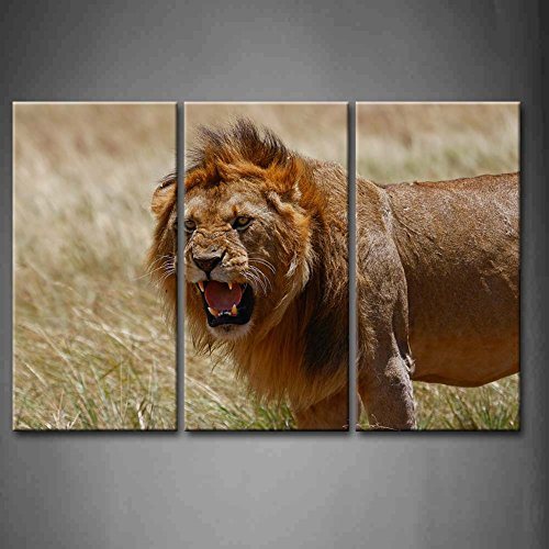 3 Panel Wall Art Lion Big Male Lion With Open Mouth In Kenya Grassland Painting Pictures Print On Canvas Animal The Picture For Home Modern Decoration Piece (Stretched By Wooden Frame,Ready To Hang)