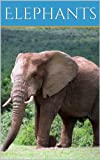 Elephant Facts and Pictures