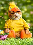 Cat dressed as Duck Easter Card - Quack!