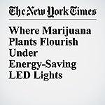 Where Marijuana Plants Flourish Under Energy-Saving LED Lights | Diane Cardwell