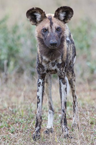 African Wild Dog Journal: 150 page lined notebook/diary