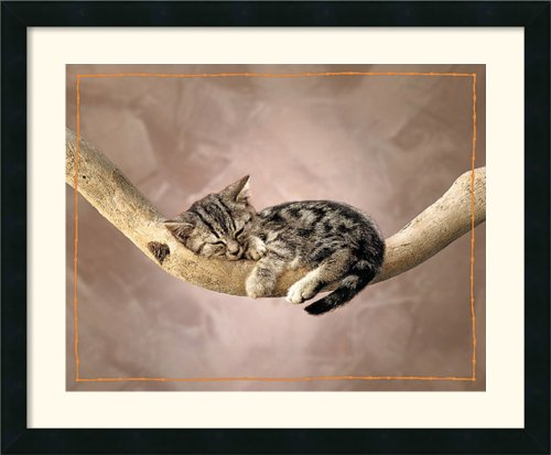 Kitten (Nap) By Unknown Framed front-649255