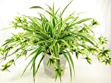 50cm Potted Artificial Silk Giant Spider Plant (Chlorophytum Comosum) ~ Office Plant in a Modern Stylish Pot ~ Home & Conservatory Decoration