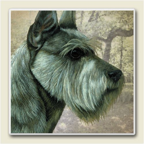 AbsorbaStone Coaster set~ Schnauzer ~4 Tile Drink Coasters ~ code 841C