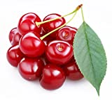 Sweet Cherry Fruit Seeds by National Gardens