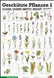 Geschützte Pflanzen 1: Schreiber Naturtafeln, Geschützte Pflanzen