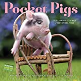 img - for Pocket Pigs Wall Calendar 2017: The Famous Teacup Pigs of Pennywell Farm book / textbook / text book