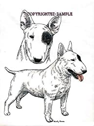 Bull Terrier - Double Image by Cindy Farmer
