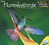 2012 Hummingbirds Wall Calendar