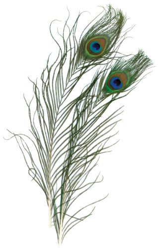 Zucker Peacock Eye Feathers, Natural, 2-Pack