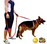 8 Ft Long Dog Leash, Dog Training Easy, Has Padded Handle, Dog Leashes for Large Dogs GUARANTEED Strong Lead