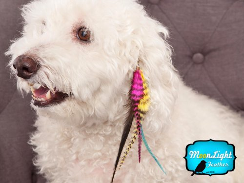 Moonlight Feather Hair Extension Feather Clips MISSY Puppy Couture Clips