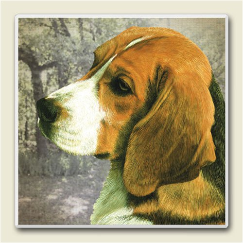 AbsorbaStone Coaster set~ Beagle ~4 Tile Drink Coasters ~ code 833C