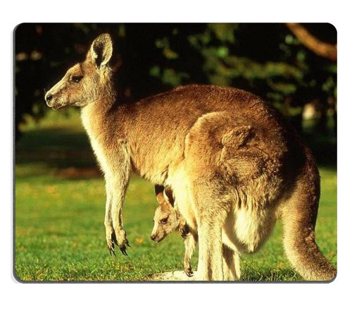 Animal Wildlife Kangaroo Mother Baby Australia Outback Mouse Pads Customized Made To Order Support Ready 9 7/8 Inch (250Mm) X 7 7/8 Inch (200Mm) X 1/16 Inch (2Mm) High Quality Eco Friendly Cloth With Neoprene Rubber Luxlady Mouse Pad Desktop Mousepad Lapt front-1013469