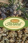 Marijuana Harvest: How to Maximize Qu...