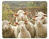 «ovins» motif humoristique