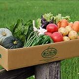 東北牧場 有機野菜10種 SSサイズセット