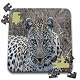 Angelique Cajam Big Cat Safari - South African Female Leopard Face - 10x10 Inch Puzzle (pzl_20104_2)