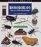 雑木林の虫の飼いかた―カブトムシ・クワガタ・オオムラサキほか (虫の飼いかた・観察のしかた)