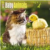 Baby Animals 2014 Wall