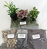 Terrarium/Fairy Garden Kit with 3 Plants - Create Your Own Living Terrarium