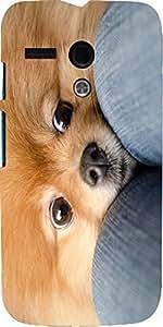 Snoogg Chihuahua Haha Case Cover For Motorola G / Moto G