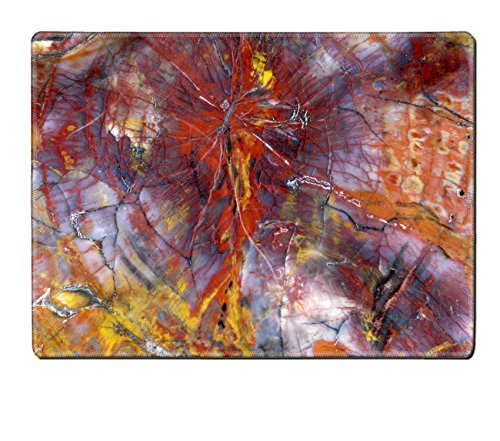 MSD Placemat Paleontology Polished Petrified Wood Closeup Natural Rubber Material Image 12483327083 (Petrified Wood Tray compare prices)