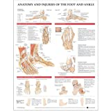 Anatomy and Injuries of the Foot and Ankle Anatomical Chartby Anatomical Chart Company