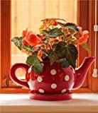 Botanico Teapot Planter Polka Dot - Berry Red