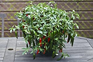 how to make your pot plants bushy