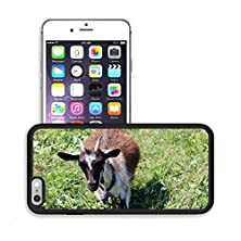 buy Luxlady Premium Apple Iphone 6 Plus Iphone 6S Plus Aluminum Backplate Bumper Snap Case Image Id 31126802 Small Goat