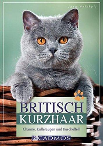 Britisch-Kurzhaar-Charme-Kulleraugen-und-Kuschelfell-Cadmos-Heimtierpraxis