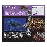 奇譚クラブ(KITAN CLUB) ネイチャーテクニカラー 日本のカメ タイマイ ガチャポン フィギュア