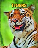 Tigers (Infosearch: Living in the Wild: Big Cats)