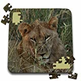Angelique Cajam Big Cat Safari - Young female lion in the grass - 10x10 Inch Puzzle (pzl_26823_2)