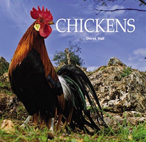 Chickens (Last Chicken compare prices)