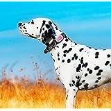 GPS pour chien, chat, KIPPY ROSE avec un an d'abonnement inclus.