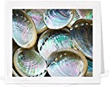 Blank Thank You Card of Abalone Paua Shells - frameable metallic photo