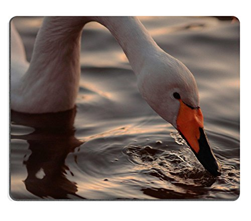 msd-natural-rubber-gaming-mousepad-a-closeup-portrait-of-whooper-swan-drinking-from-the-rippling-sur