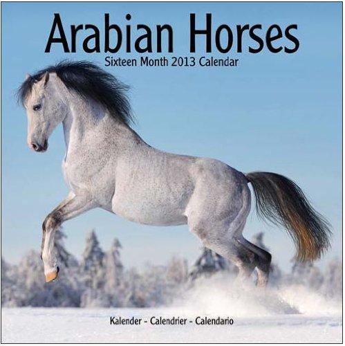 2013 Calendar) Arabian Horses 2013 Wall Calendar