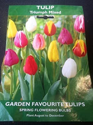 De Ree Bulbs - Tulip Triumph Mixed PRE ORDER FOR SPRING OGD263