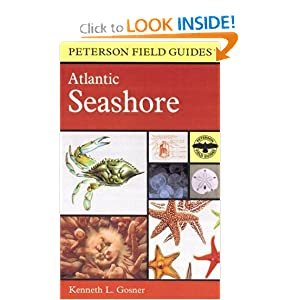 A Field Guide to the Atlantic Seashore Kenneth L. Gosner, Roger Tory Peterson