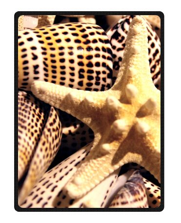 Seashell Throw Blanket front-1036115