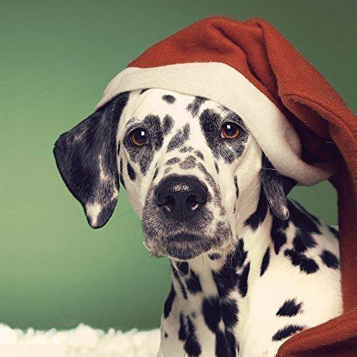 dalmatian-in-santa-hat-christmas-card