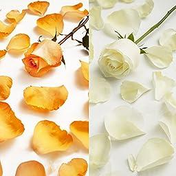 Farm Fresh Natural White - Orange Rose Petals - 3000 petals